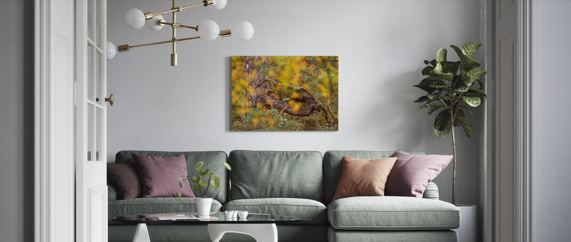 Red Squirrel on Old Pine Tree - Canvas print - Living Room