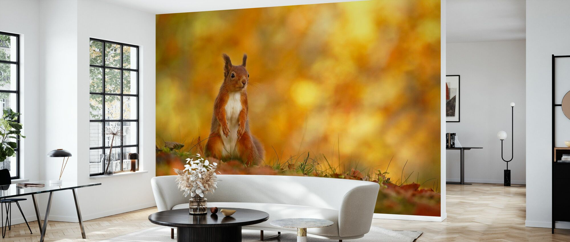 Red Squirrel on Forest Floor - Wallpaper - Living Room