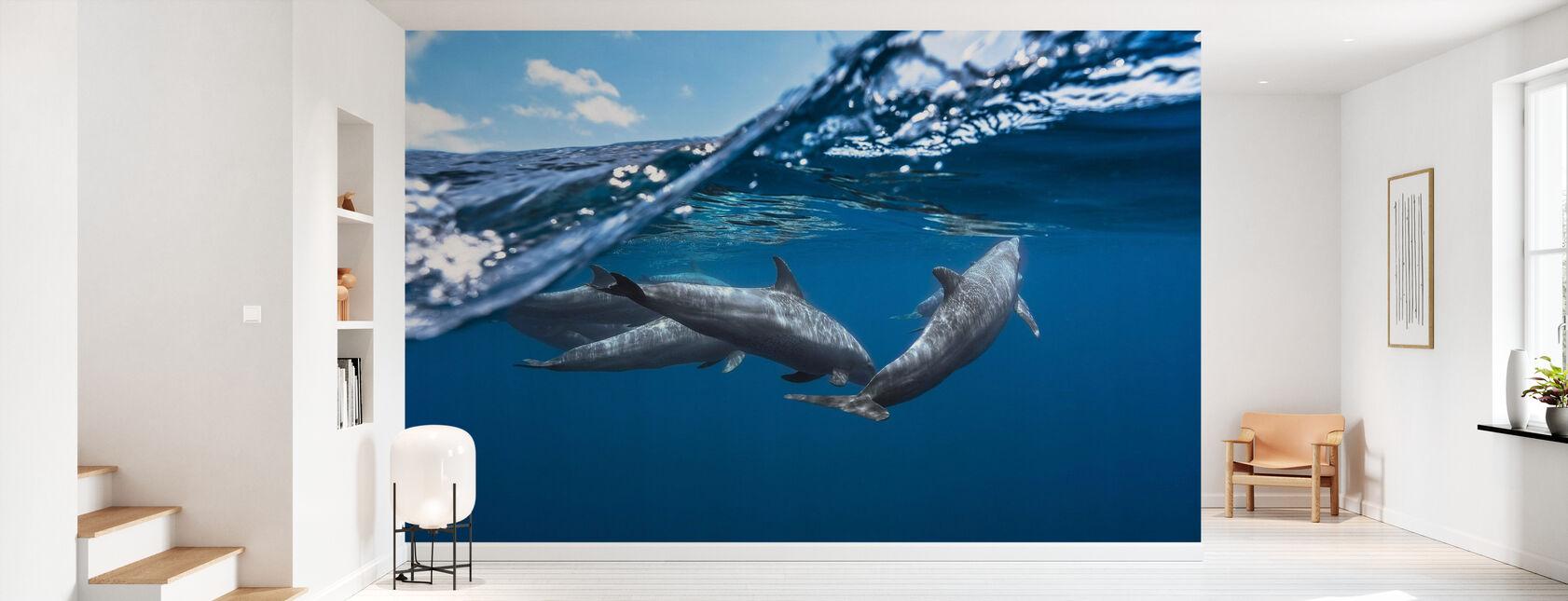 Dolphins - Wallpaper - Hallway