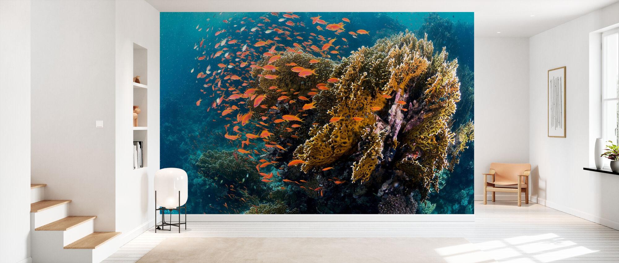 Reefscape - Wallpaper - Hallway