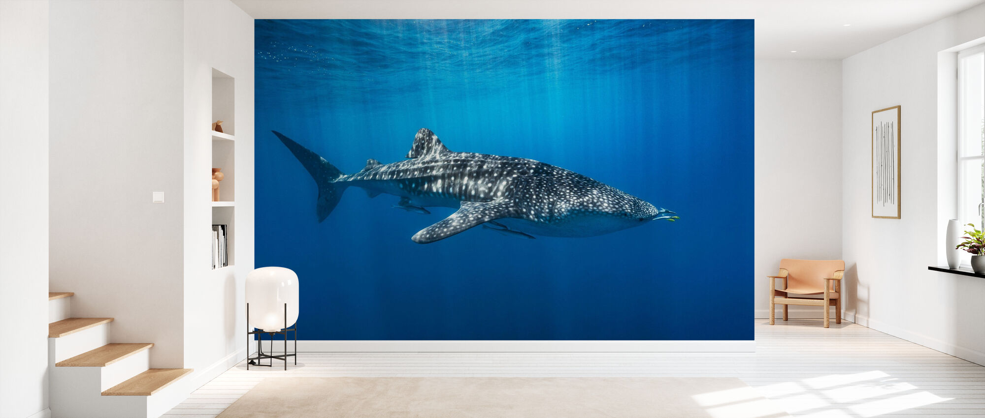 Whale Shark in the Blue - Wallpaper - Hallway