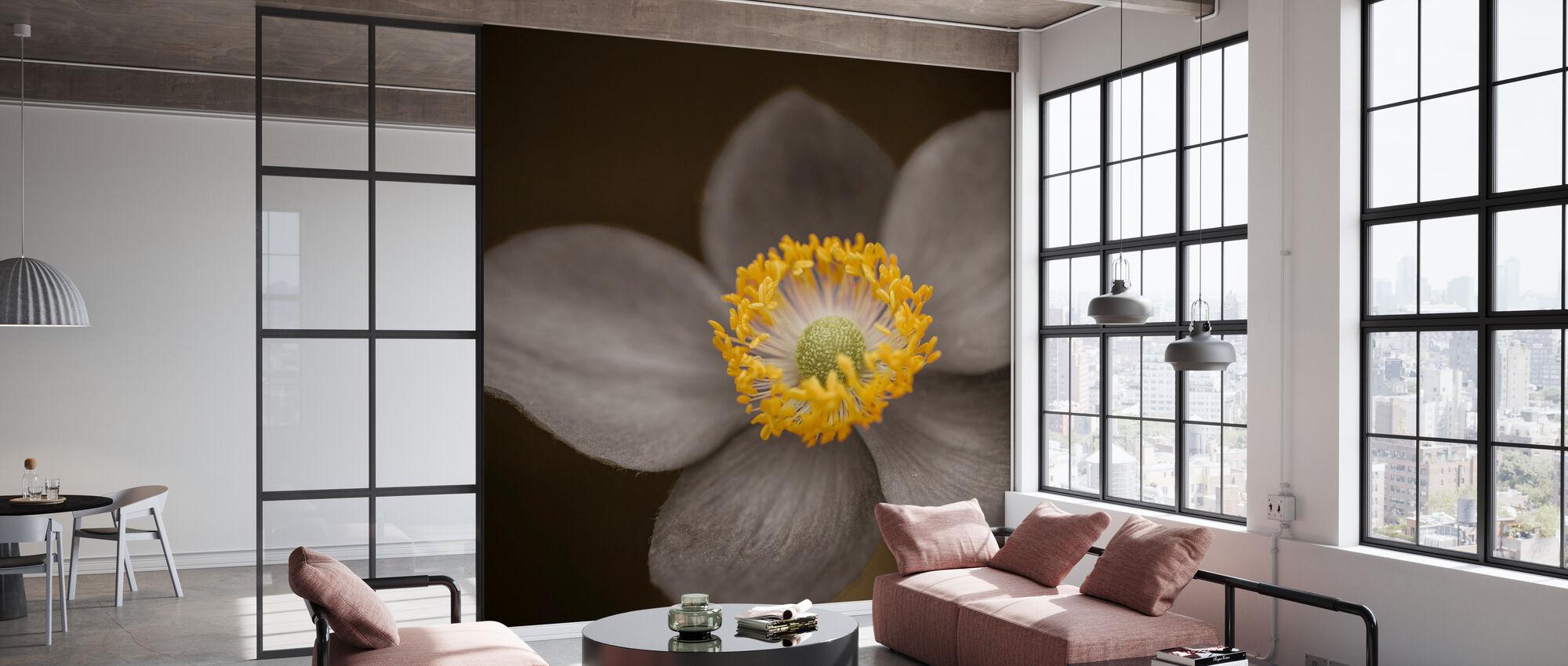 Anemone - Wallpaper - Office