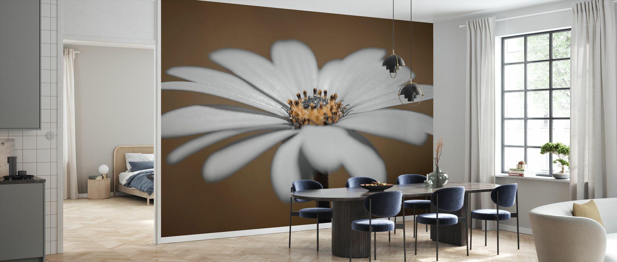 African Daisy - Wallpaper - Kitchen