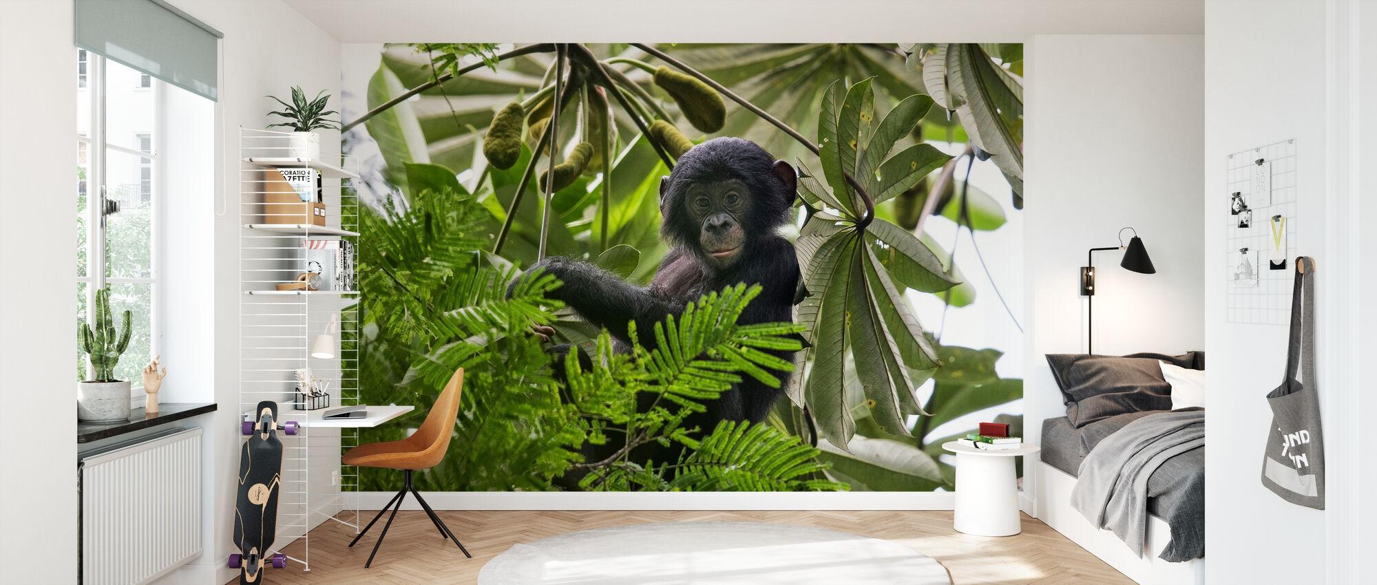 Baby Bonobo - Wallpaper - Kids Room
