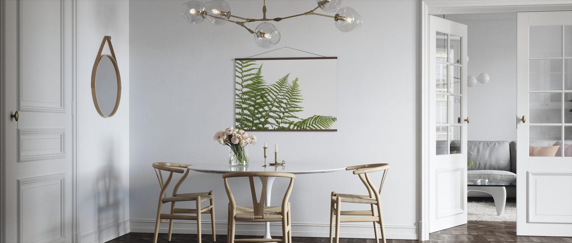 Ferns - Poster - Kitchen