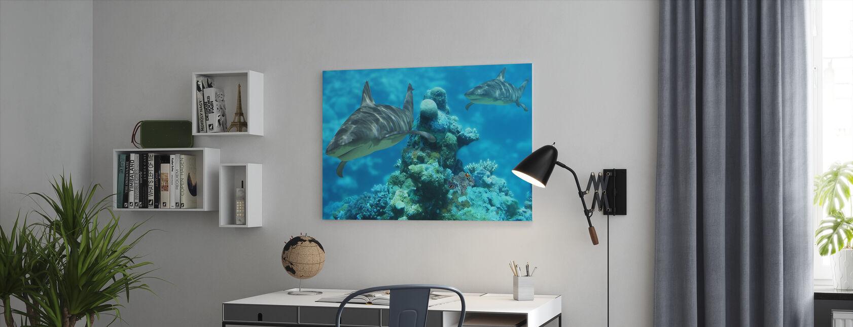 Shark bommie - Lerretsbilde - Kontor