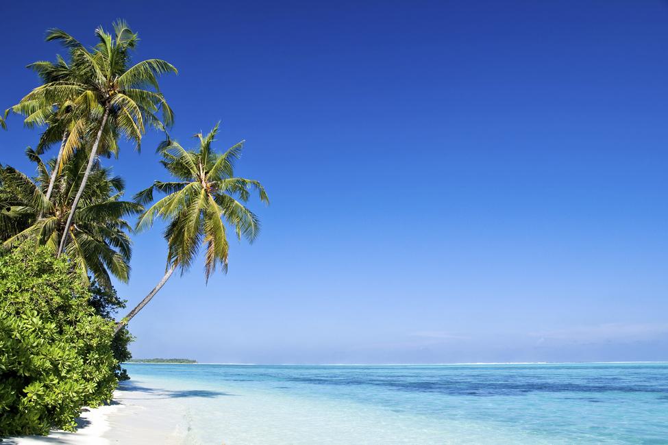 Kuva Tropical Paradise Tapetit / tapetti 100 x 100 cm