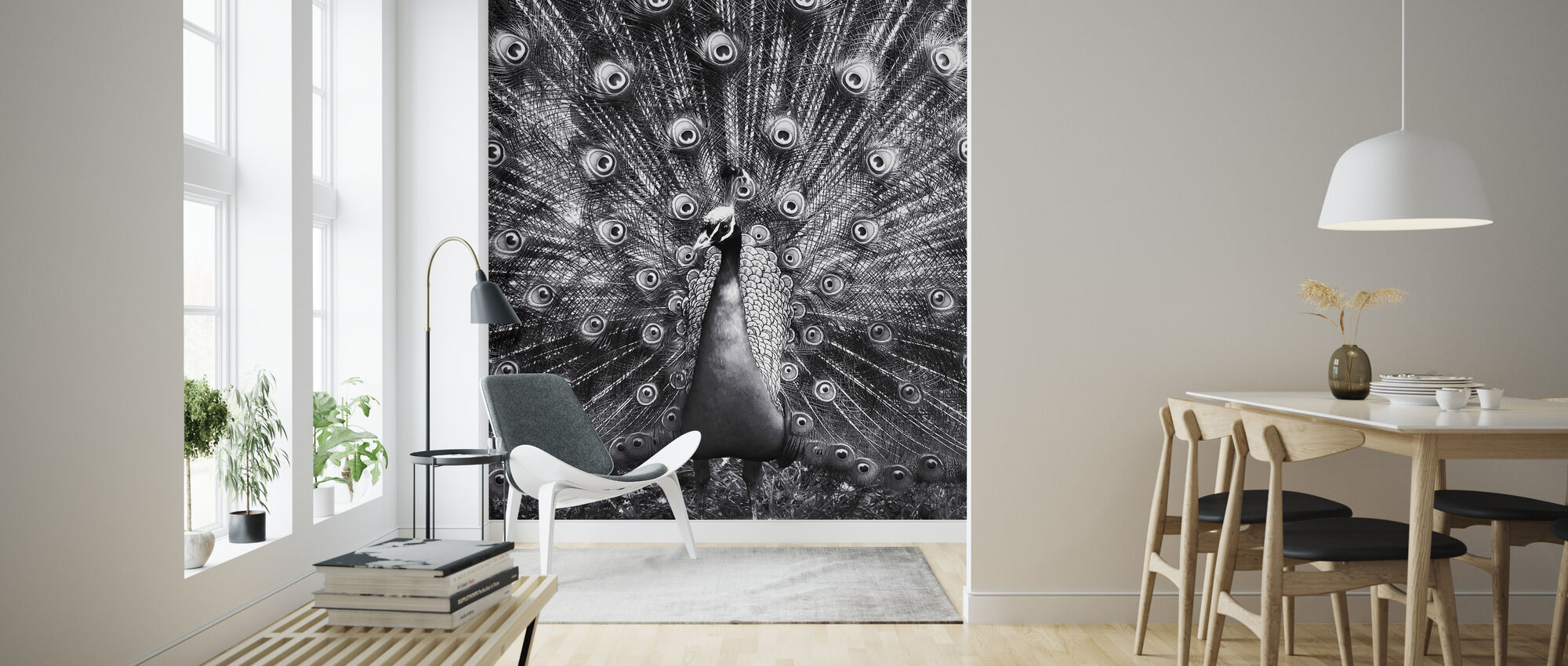 Peacock - Wallpaper - Living Room