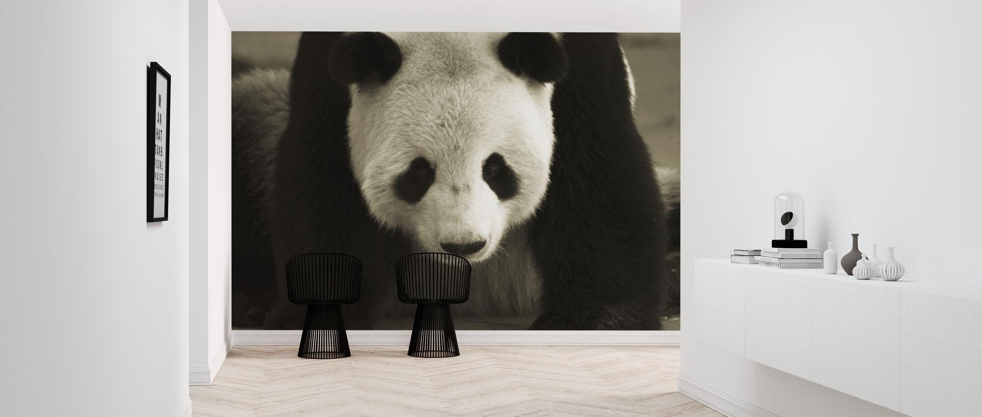 Giganten panda - Tapet - Gang