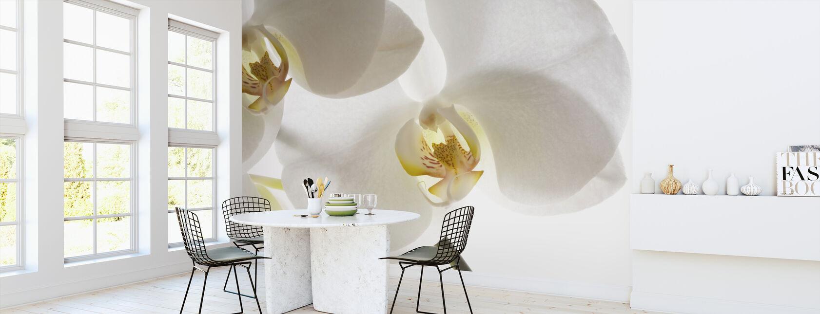 Vita orkidéer - Tapet - Kök