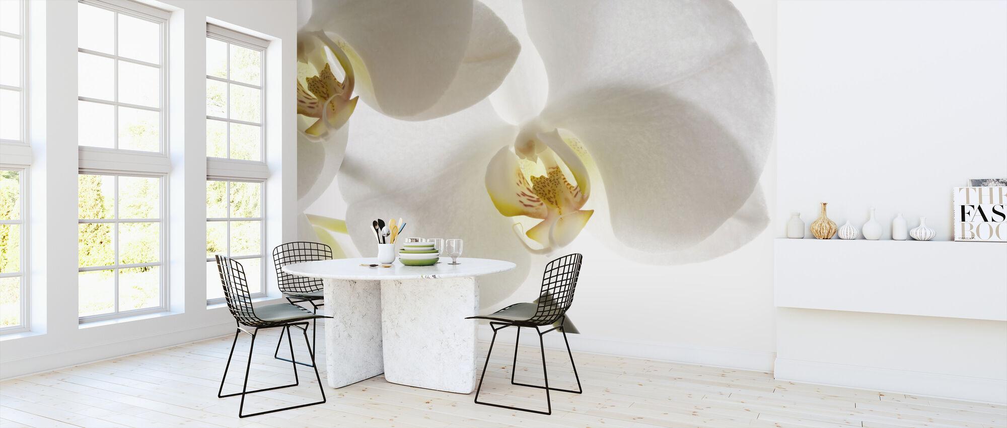 White Orchids - Wallpaper - Kitchen