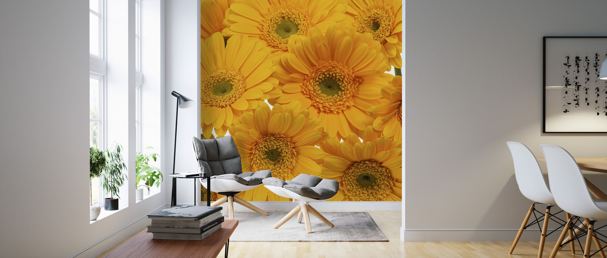 Yellow Gerbera Close Up - Wallpaper - Living Room