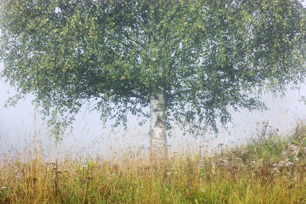 Kuva Peaceful Place Tapetit / tapetti 100 x 100 cm