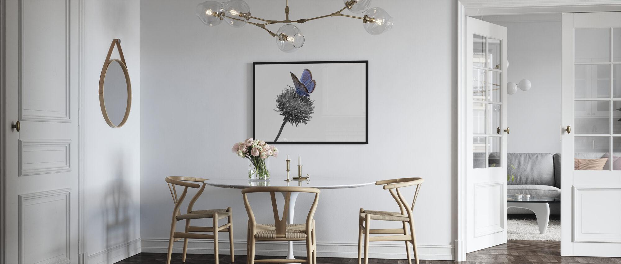 Julius Butterfly - Colorsplash - Framed print - Kitchen