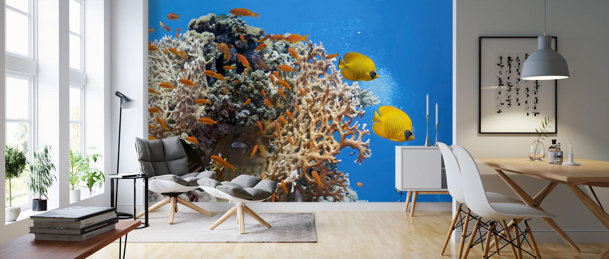 Korall Scene - Panorama - Tapet - Stue