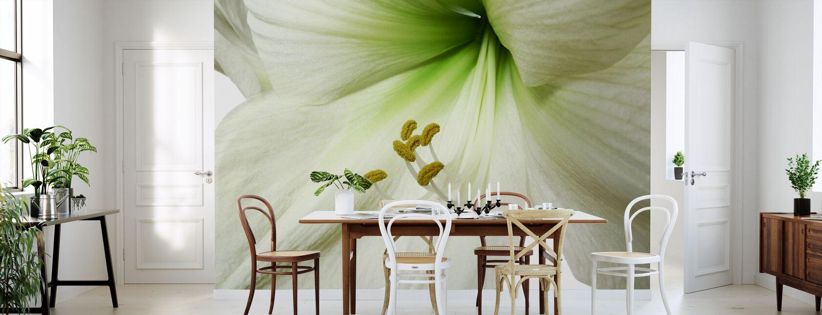Amaryllis - Close up - Wallpaper - Kitchen