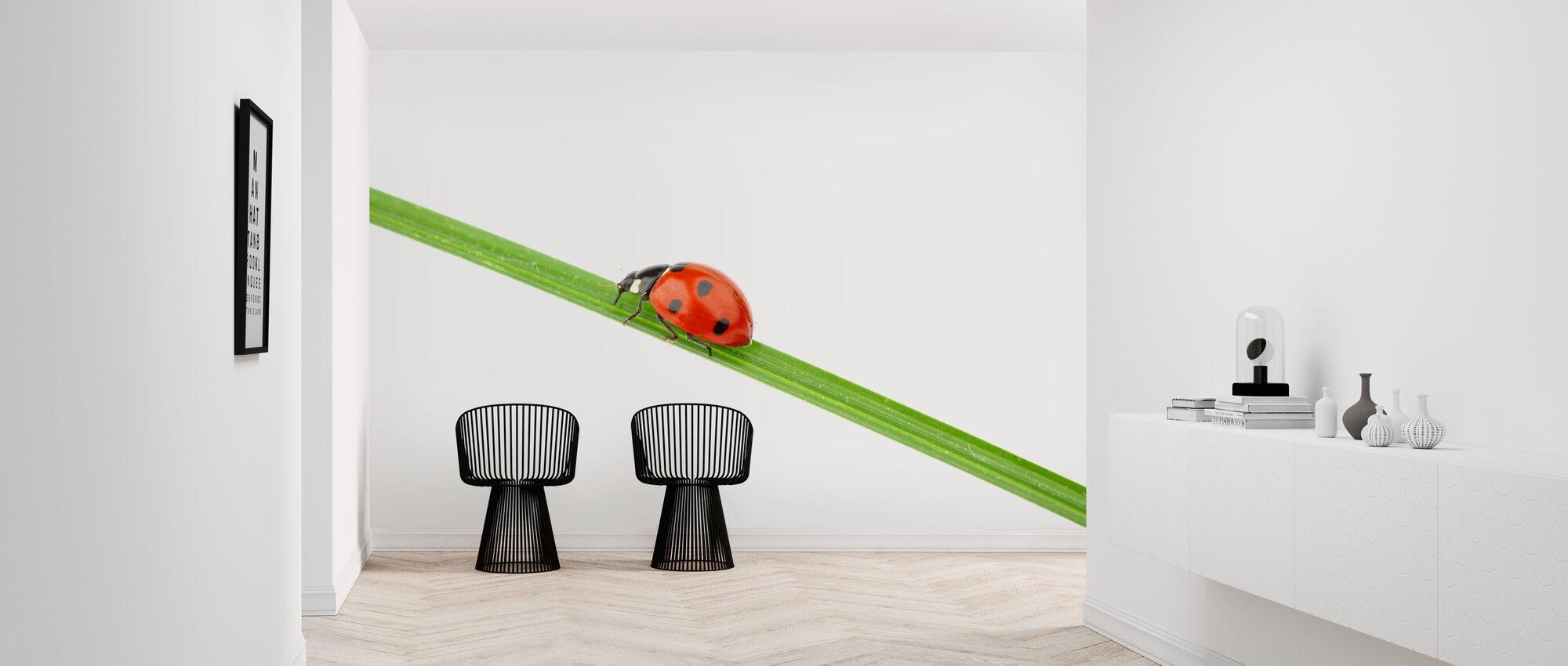Lieveheersbeestje op een rietje - Behang - Gang