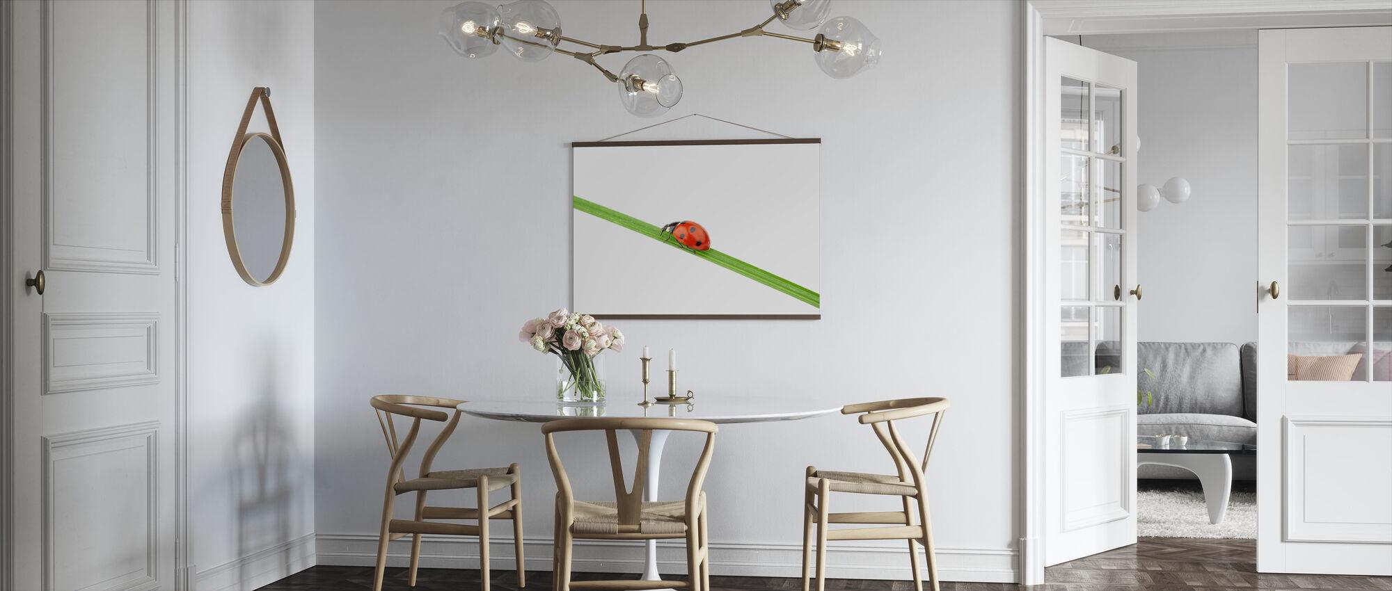 Lieveheersbeestje op een rietje - Poster - Keuken