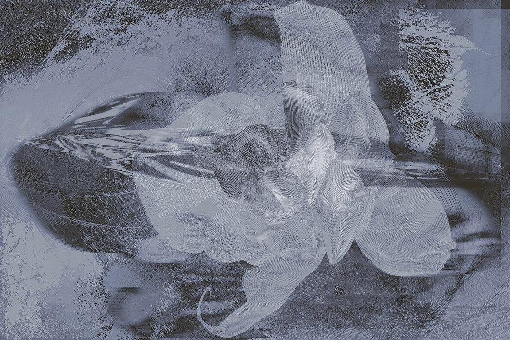 Orkidé kaos - Grå - Billede på lærred