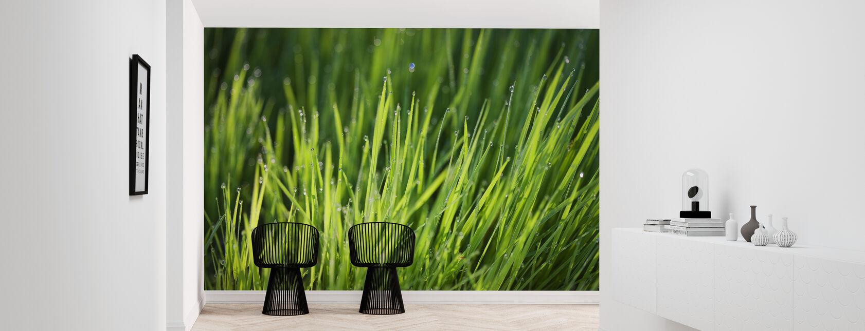 Kasteta ruoholla - Tapetti - Aula