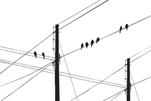Fototapet - Powerlines - Black