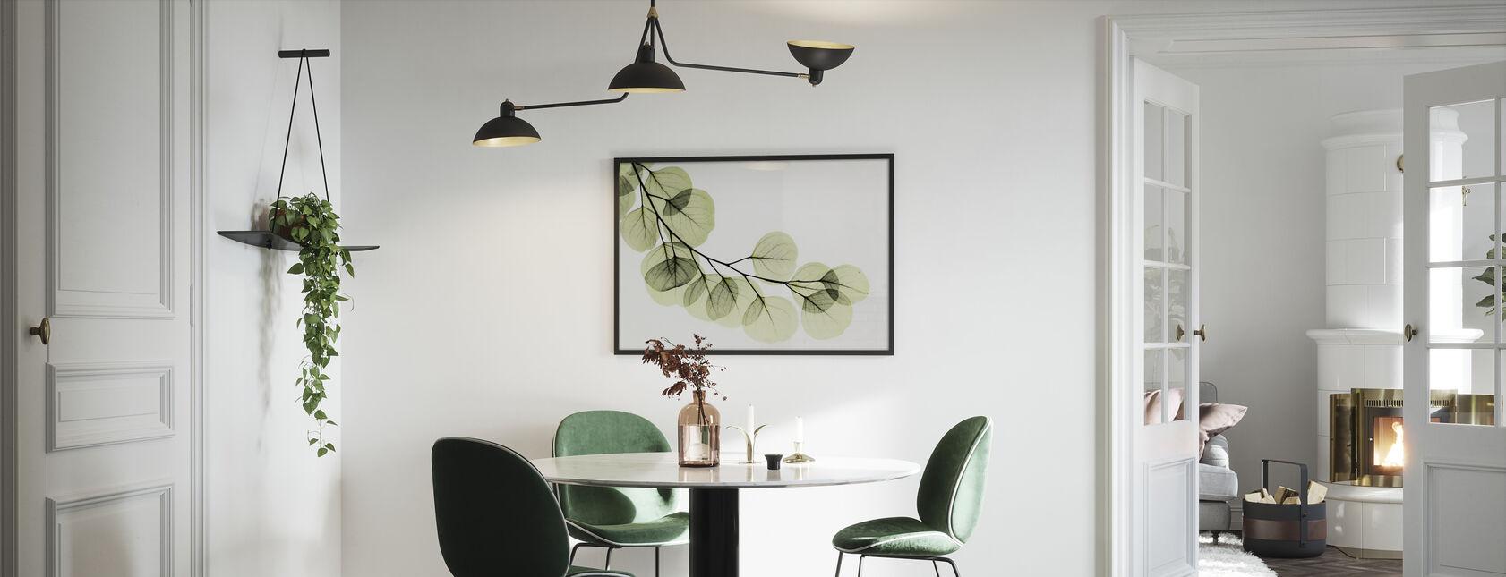 Eukalyptus - Gerahmtes bild - Küchen