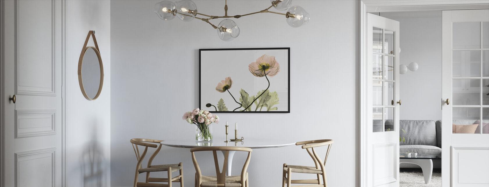 Iceland Poppy - Framed print - Kitchen