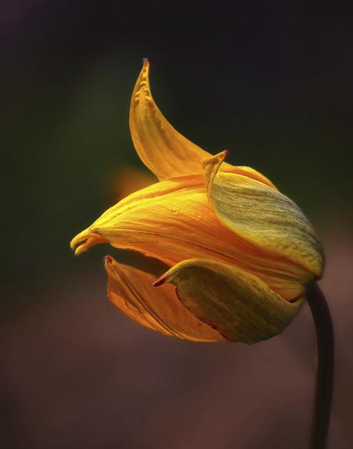 Orange Flower Fototapeter & Tapeter 100 x 100 cm