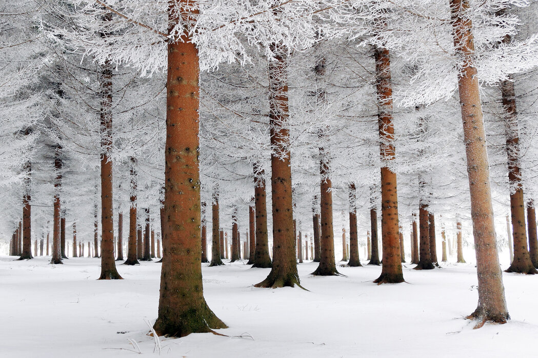White Forest Made To Measure Wall Mural Photowall