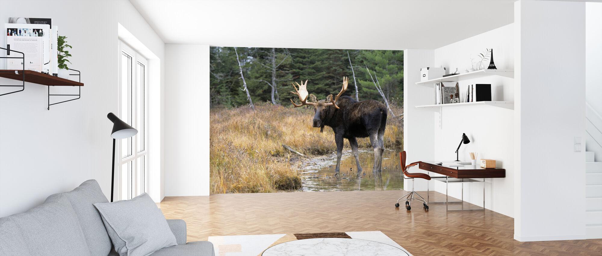 Moose in Woods - Wallpaper - Office