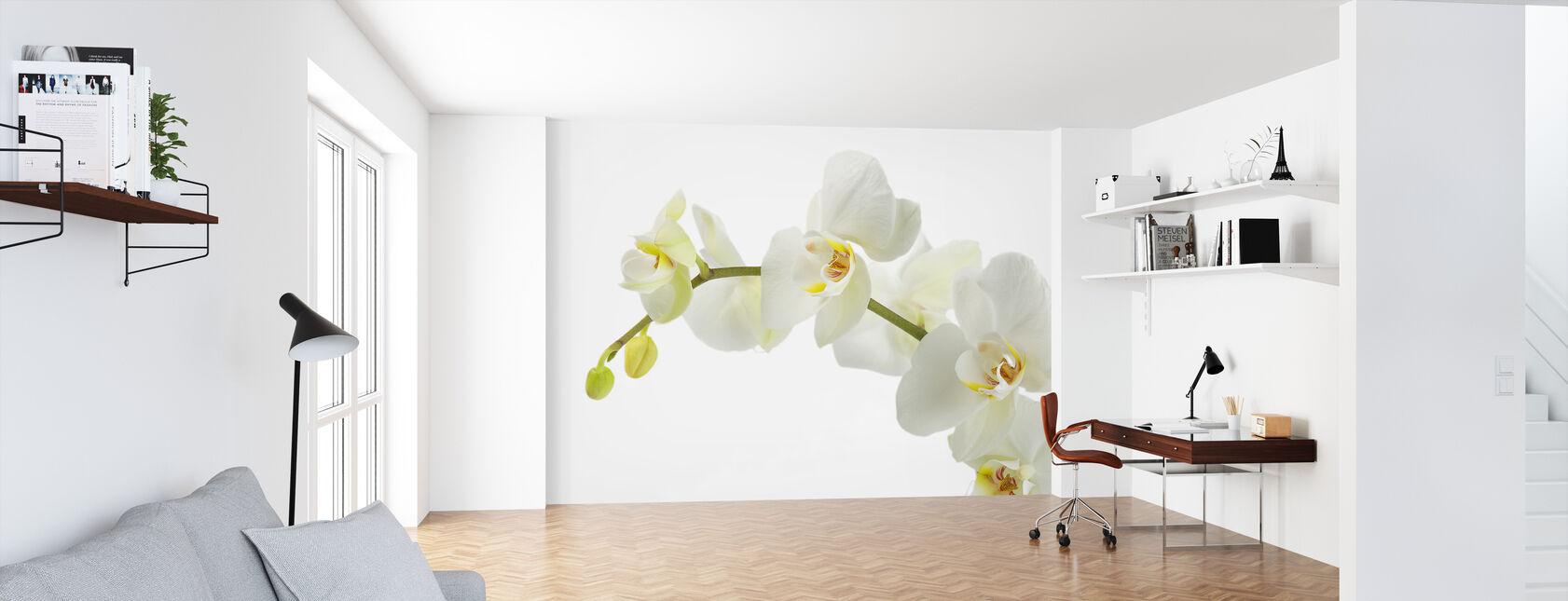 Zachte witte orchidee stengel - Behang - Kantoor