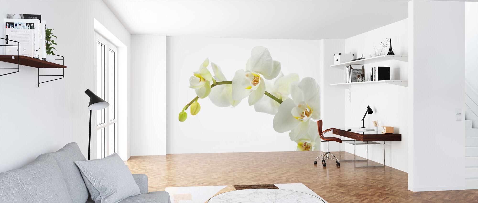 Soft White Orchid Stem - Wallpaper - Office