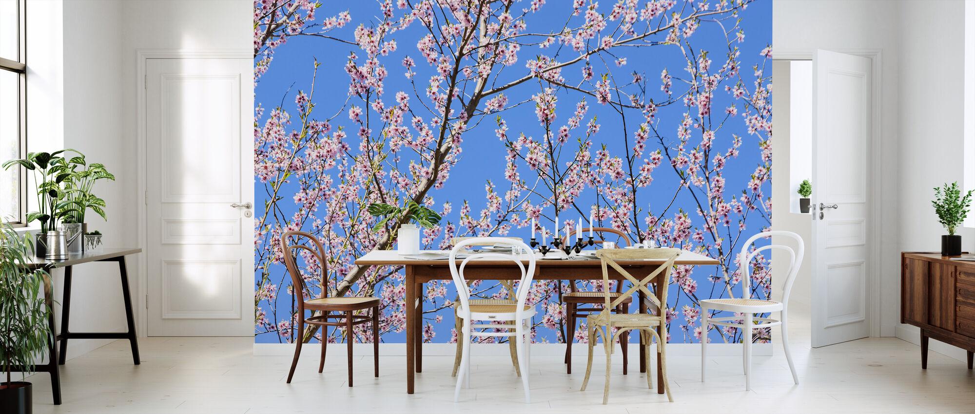 Kirsebær Blossom Grener - Tapet - Kjøkken