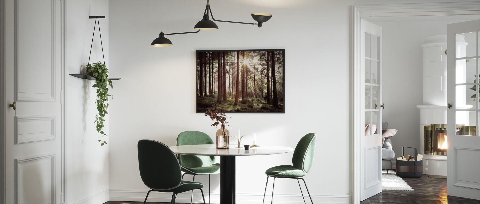 Solstråle genom träd - Retro - Inramad tavla - Kök