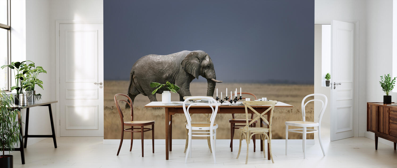 elephant in grassfield fototapete nach ma photowall. Black Bedroom Furniture Sets. Home Design Ideas