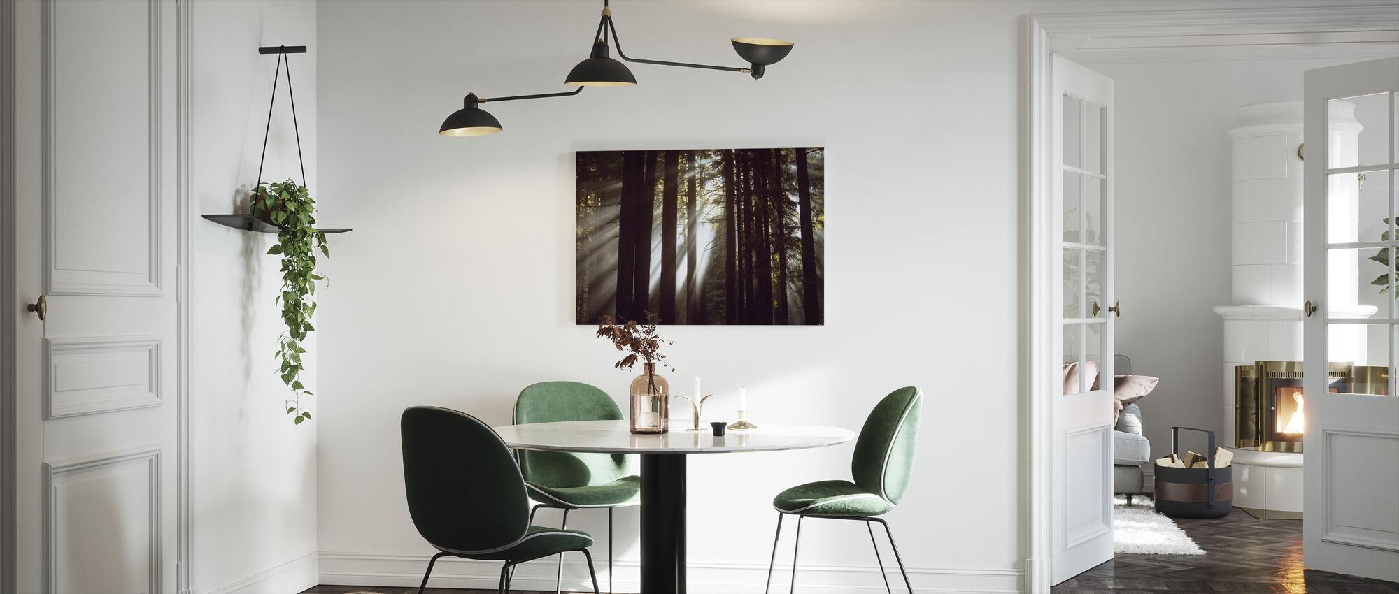 Sunlight Through the Redwoods 2 - Canvas print - Kitchen