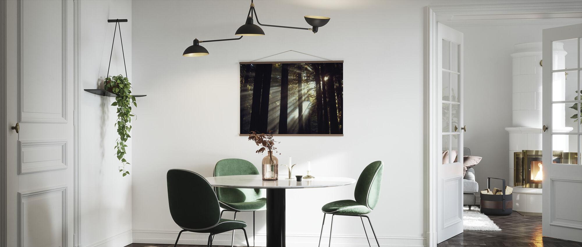 Sunlight Through the Redwoods - Poster - Kitchen