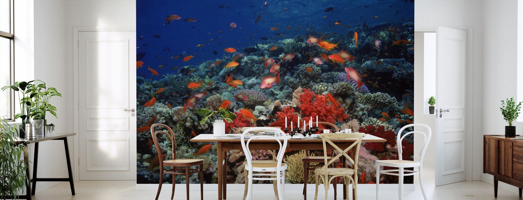 Mer Rouge - Papier peint - Cuisine