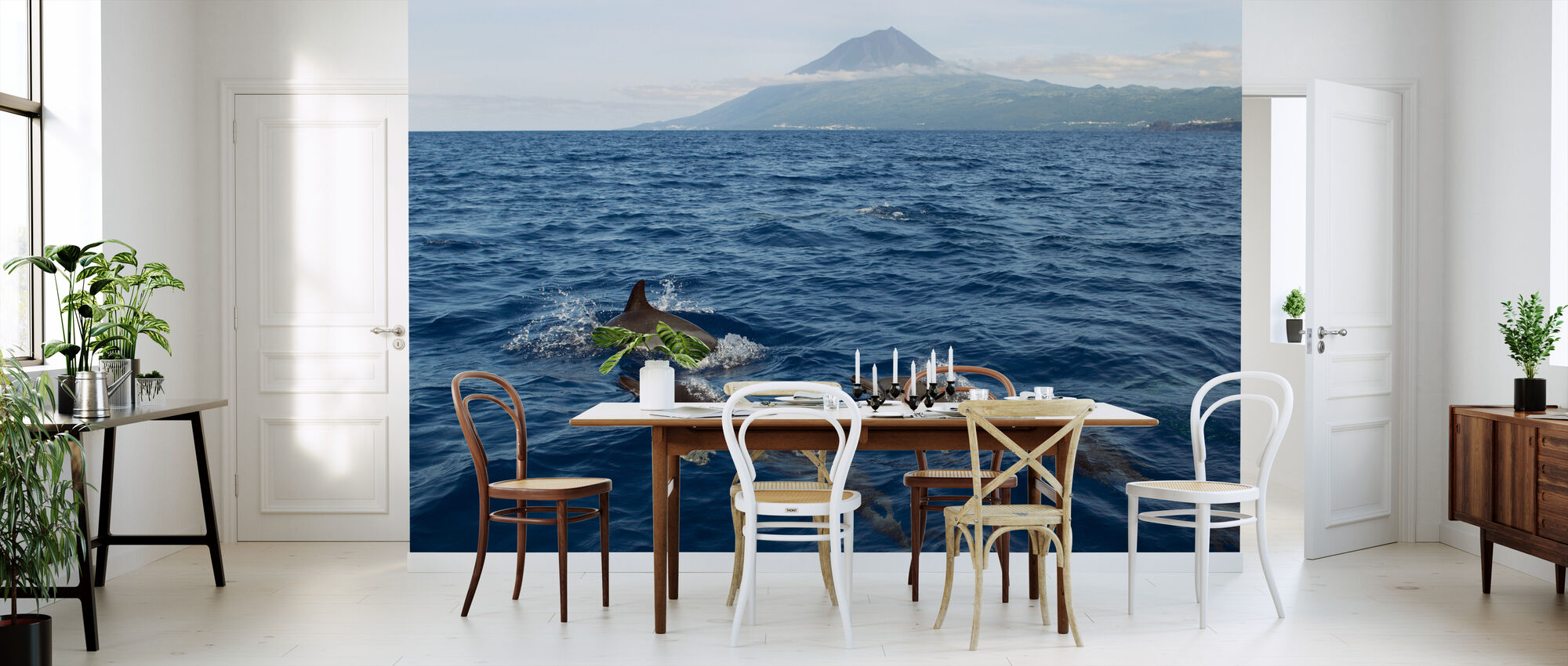 Dolphins in the Azores - Wallpaper - Kitchen