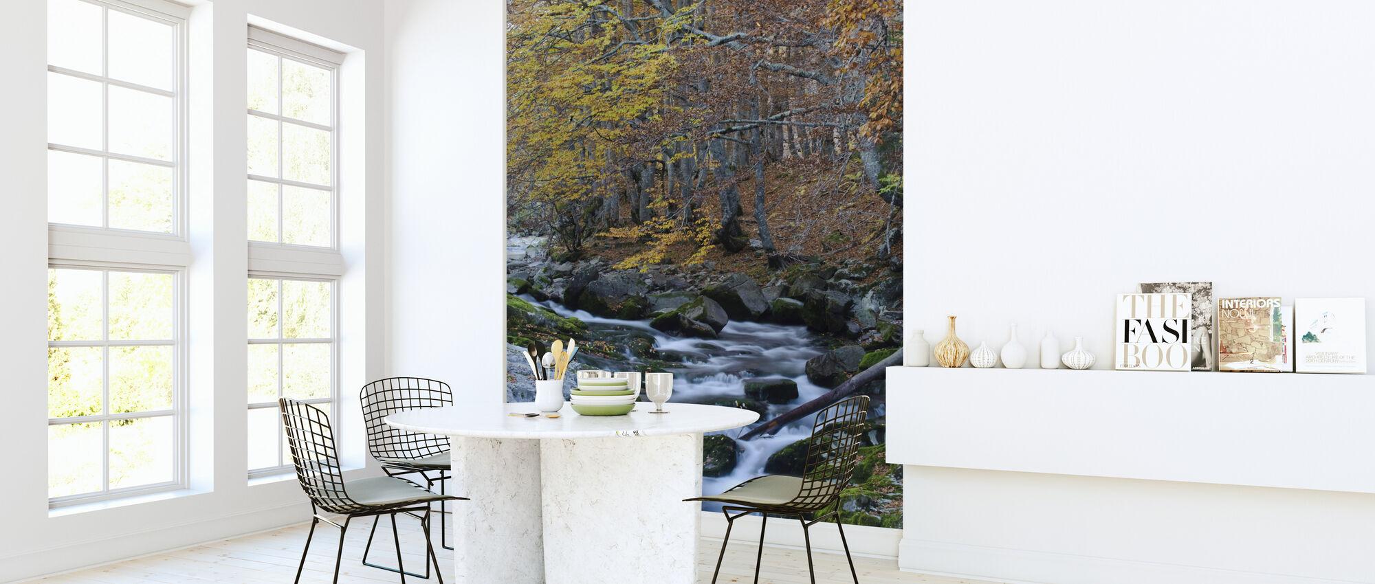 Woodland Autumn Water - Wallpaper - Kitchen