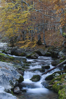 Fototapet - Woodland Autumn Water