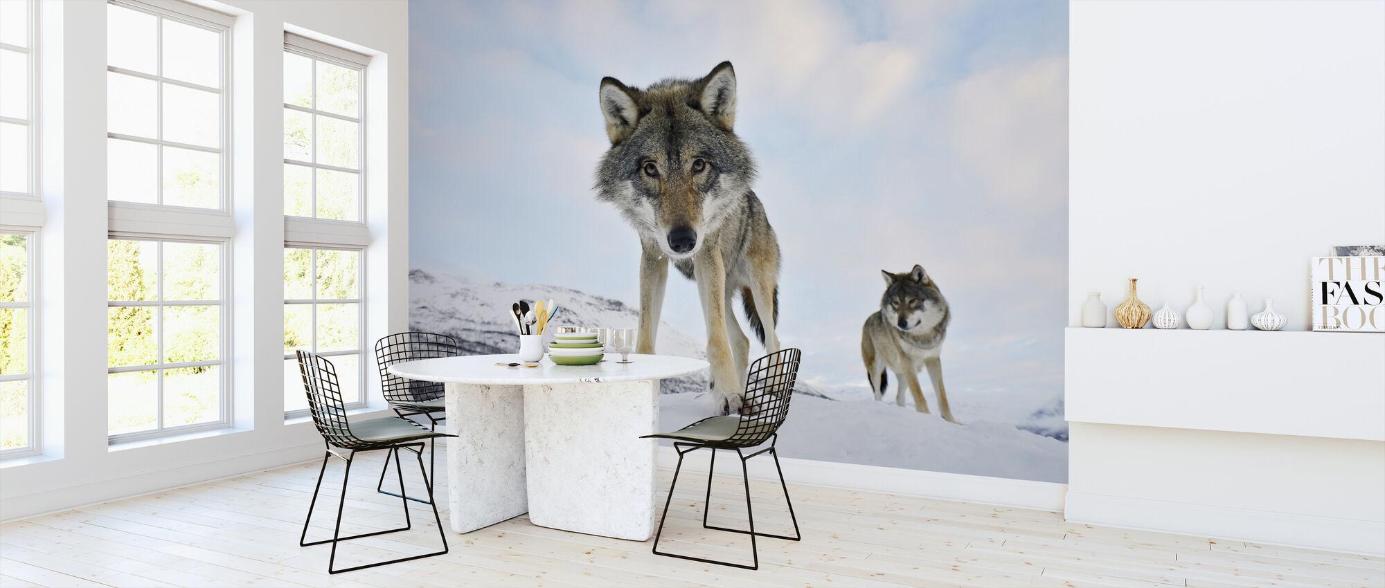Intresserad grå varg - Tapet - Kök