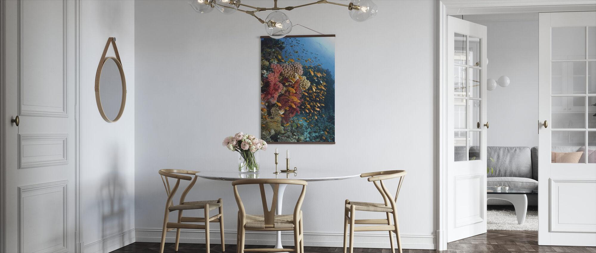 Pehmeät korallit - Juliste - Keittiö