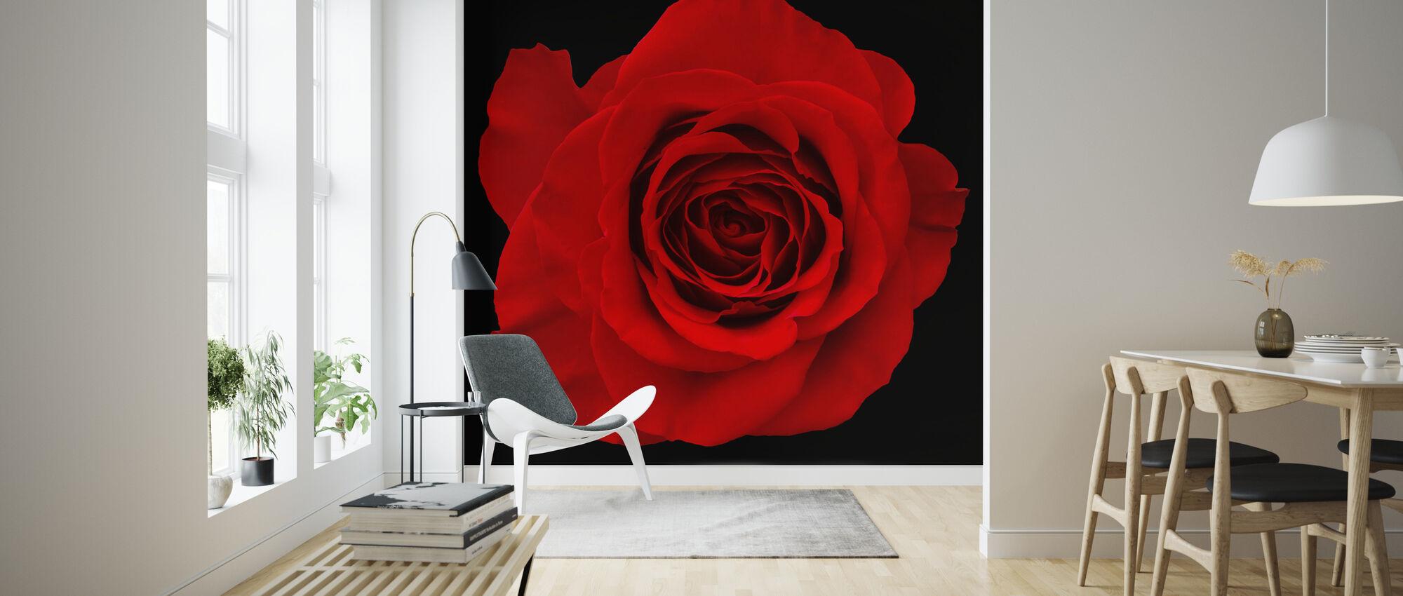 Punainen ruusu eristetty - Tapetti - Olohuone
