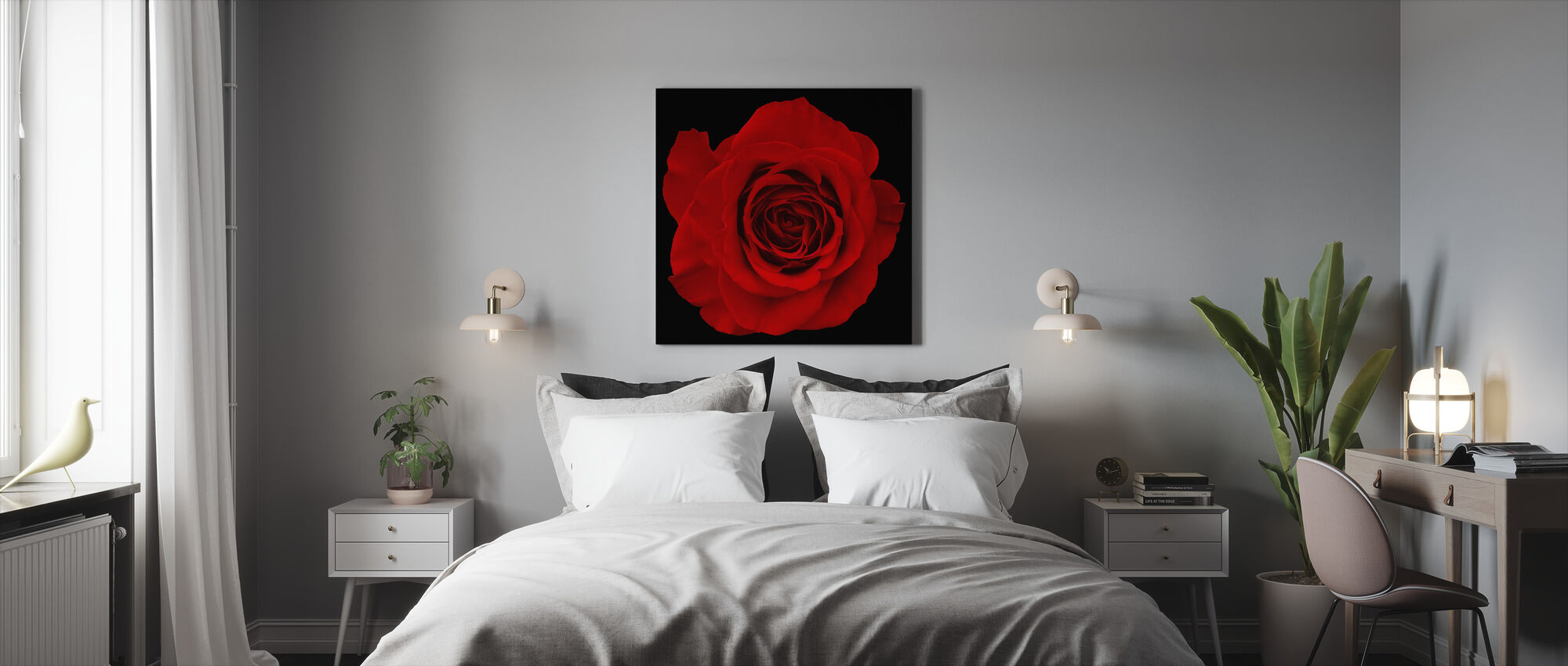 Red Rose Isolated - Canvas print - Bedroom