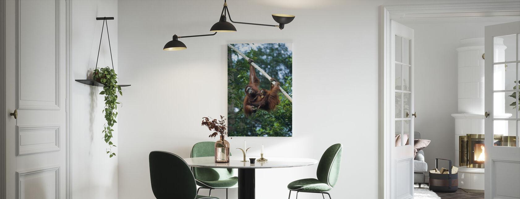 Kiipeily Orangutan - Canvastaulu - Keittiö