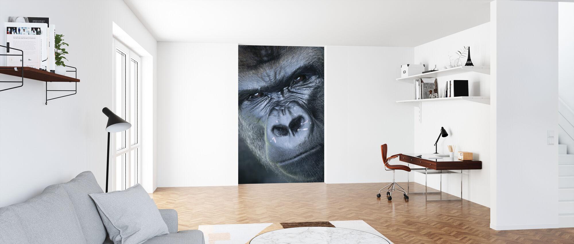 Gorilla Portræt - Tapet - Kontor