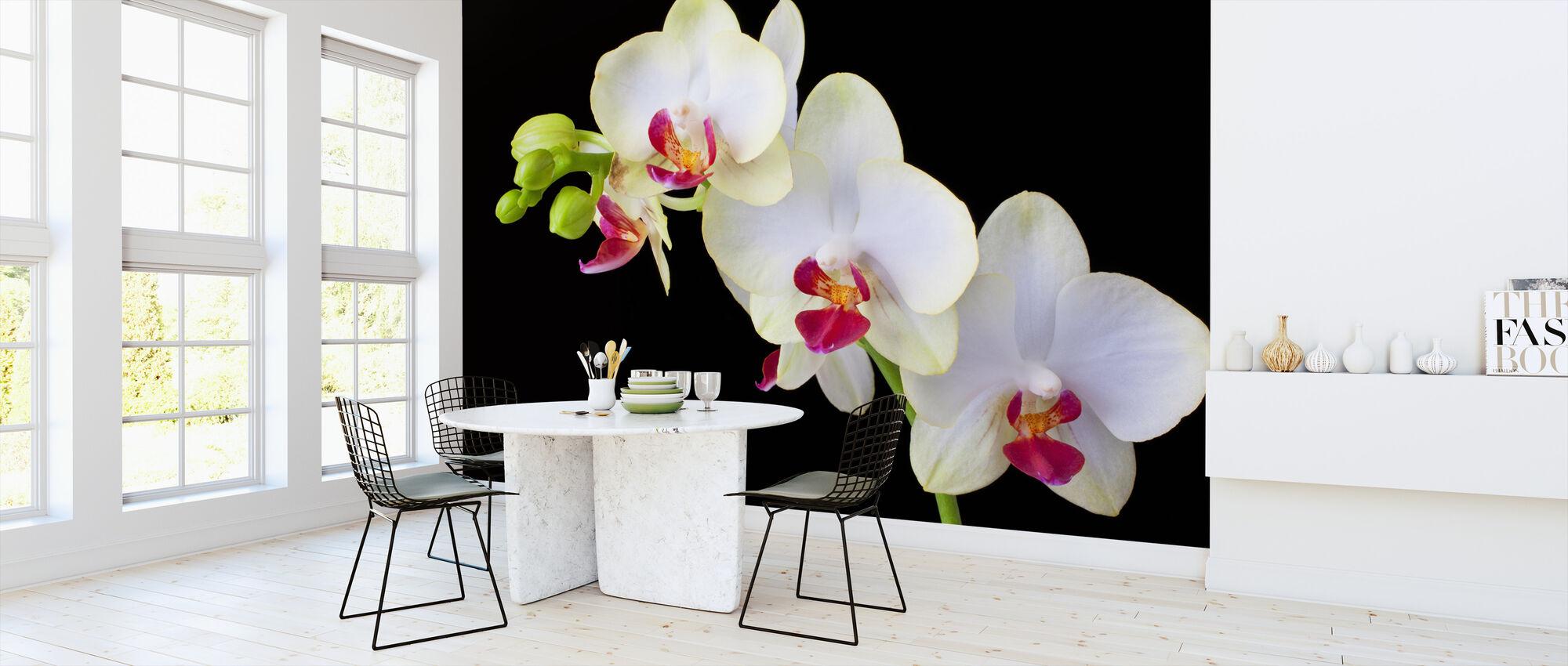 Hvite orkideer på svart bakgrunn - Tapet - Kjøkken
