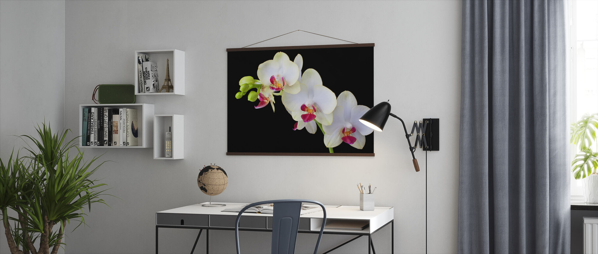 White Orchids on Black Background - Poster - Office
