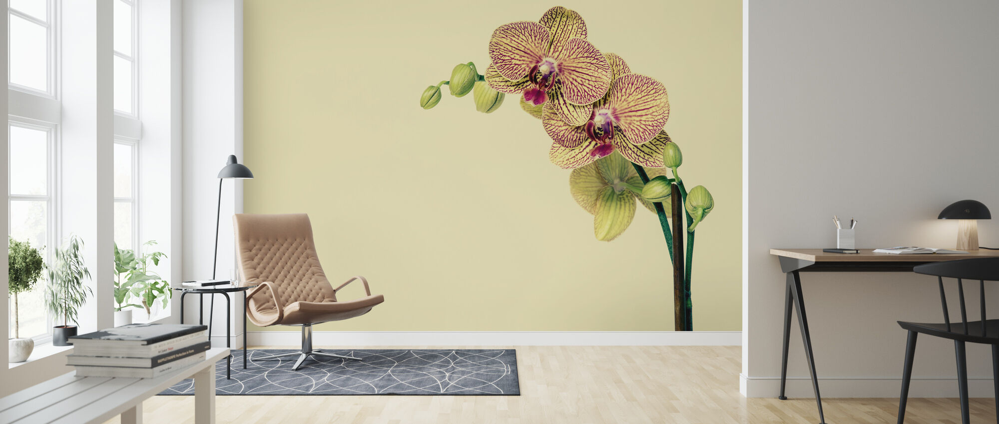 Pale Orchid - Wallpaper - Living Room